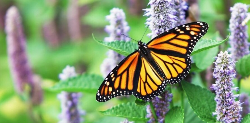From Butterflies to Beauty