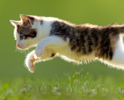 TRIVIA: HERE, KITTY, KITTY