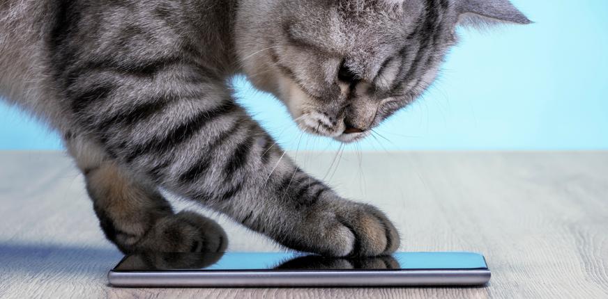Trivia: Cat Calls