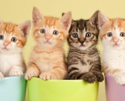 TRIVIA: MORE CATS!