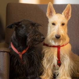 Maisie and Annie